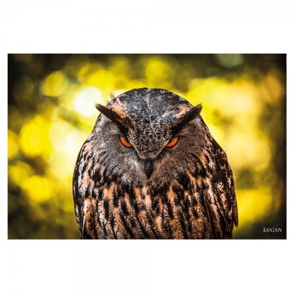 Bild Gemälde Alu Art 80 x 120 cm Angry OWL Eule